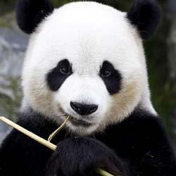 Vitiligo 'Panda' Eye Treatment